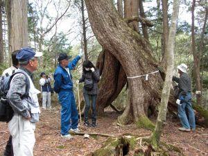 アライダシ原生林トレッキングツアー風景