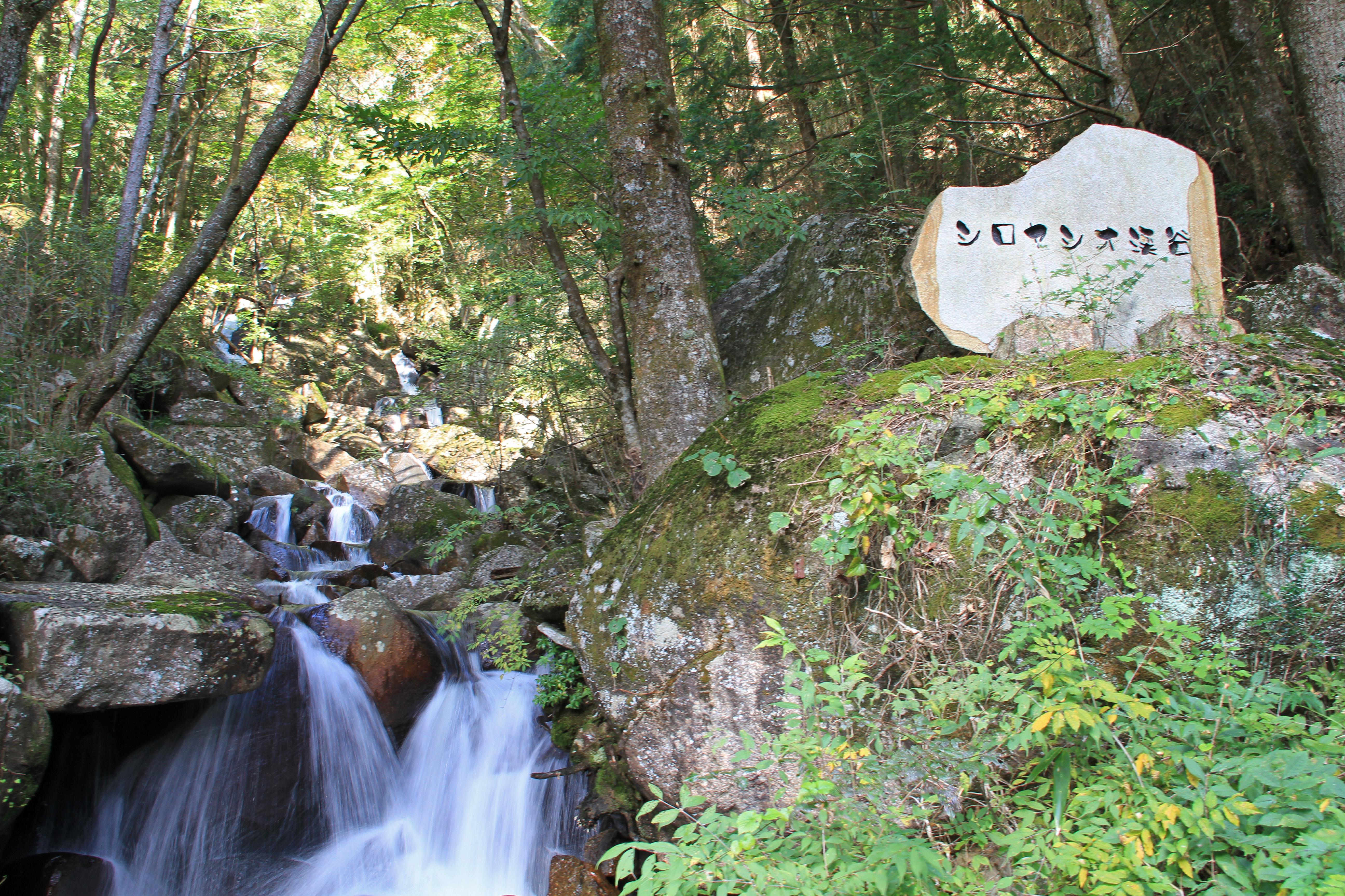 シロヤシオ渓谷