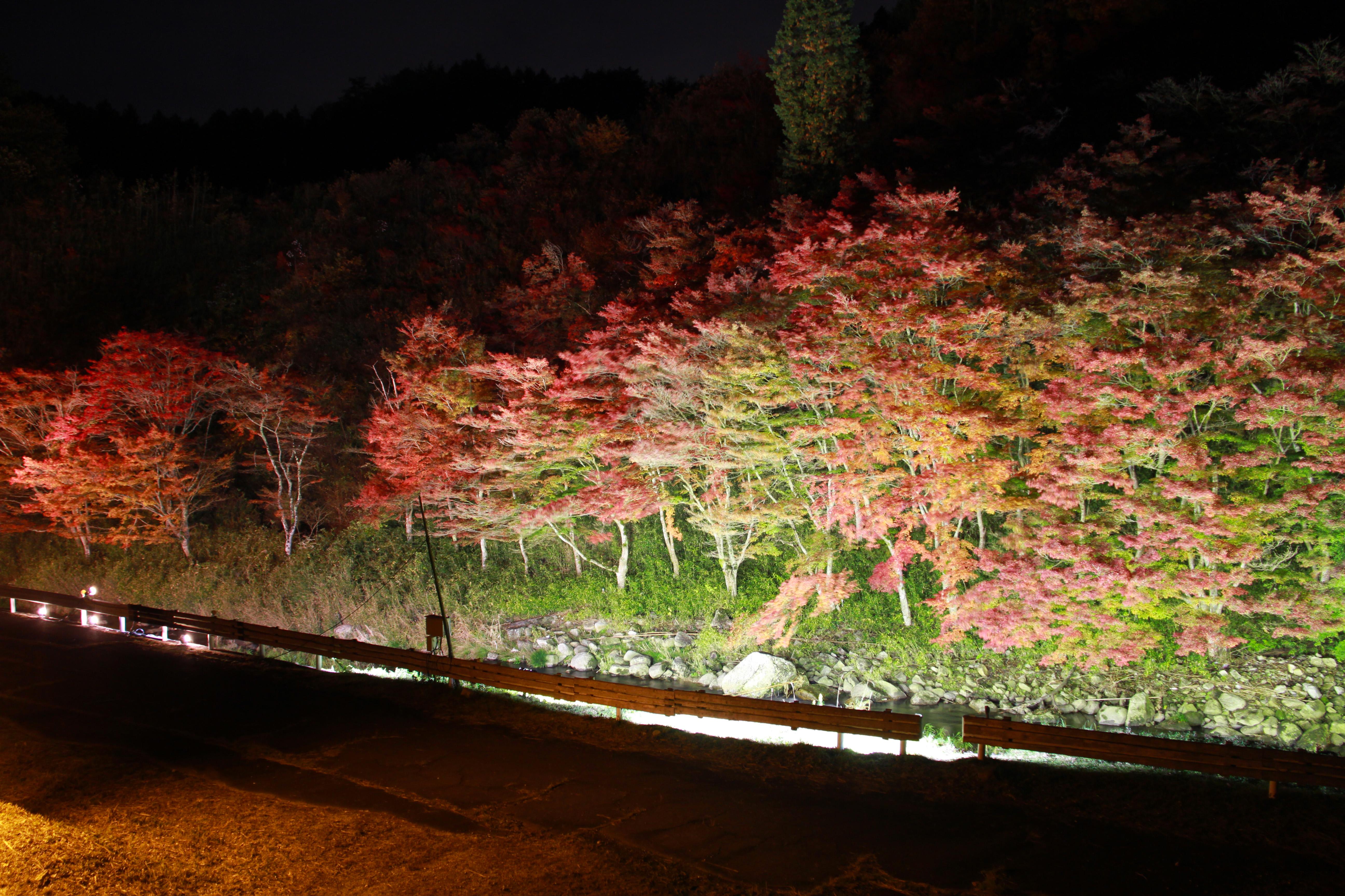 下ヶ渕のカエデ並木