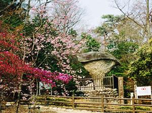 国指定天然記念物「傘岩」2
