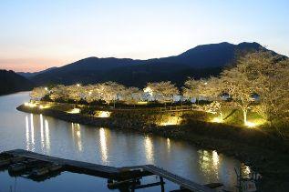 恵那峡さざなみ公園の桜