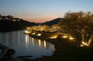 恵那峡さくらライトアップ