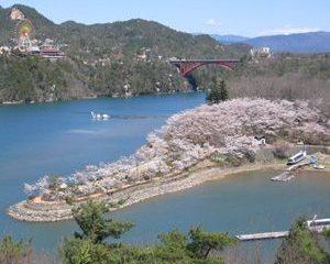 恵那市内の桜