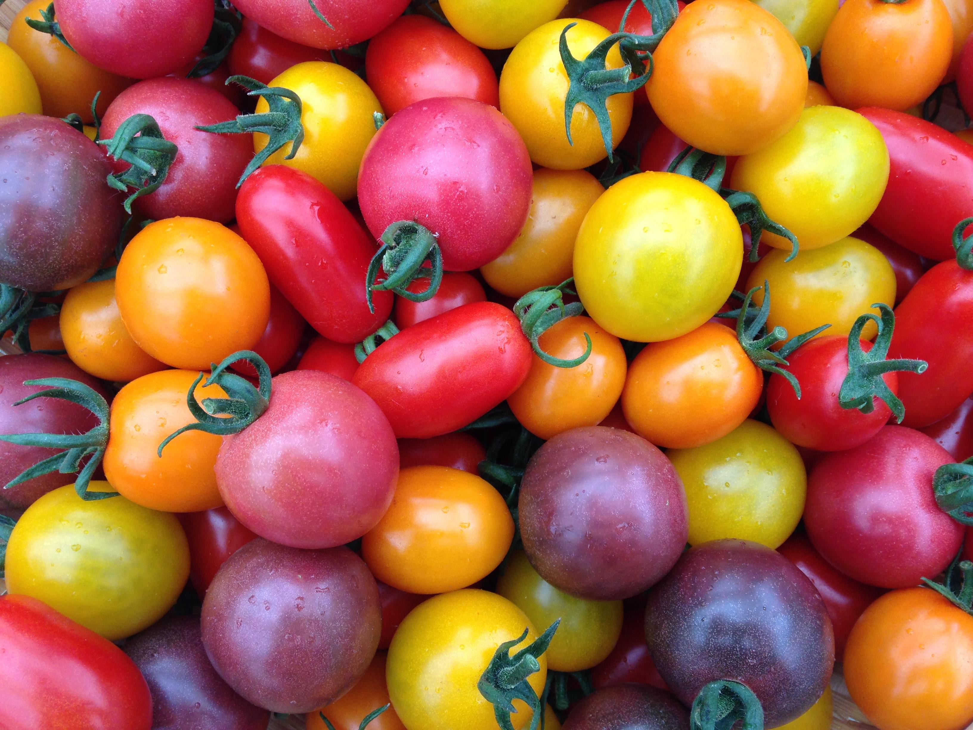カラフルなトマトたち